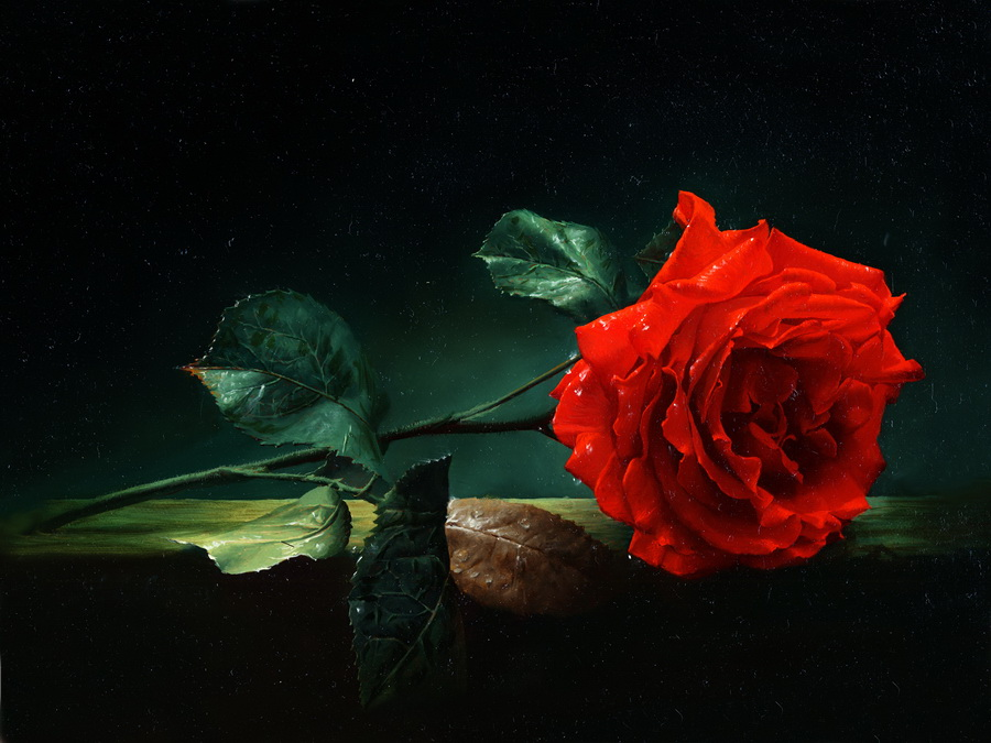 Картинки одиночных цветов 5